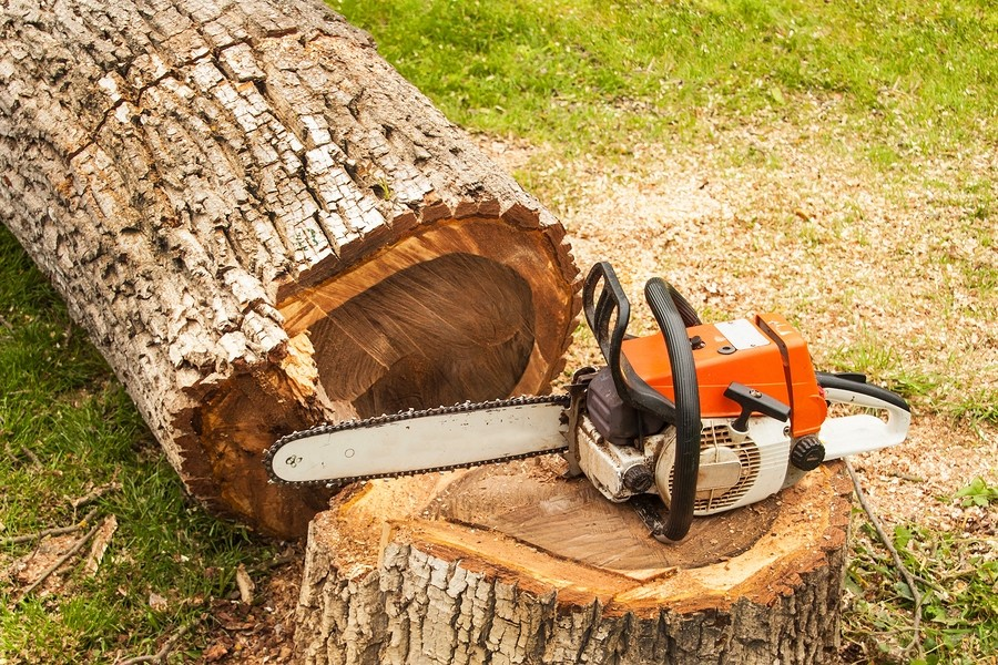 image shows recently cut tree stump prepaired for removal in cambridge